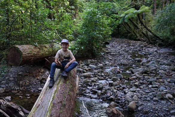 Fast allein im Tararua Forest