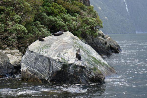 Endlich mal Glück mit dem Wetter – Milford Sound bei Sonne